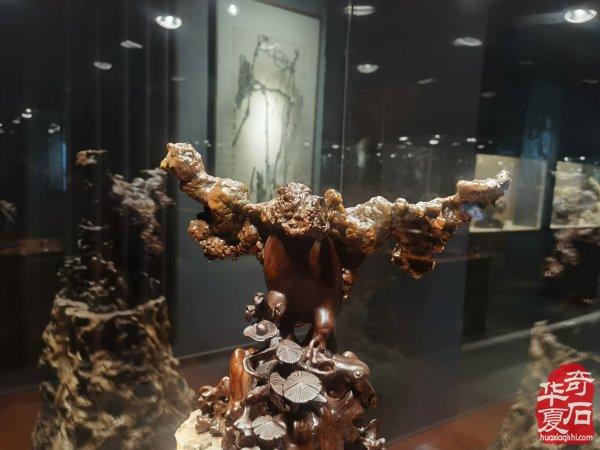 美石盛宴《百石缘》 参访宋明水奇石博物馆