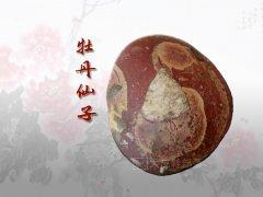 剪红云,抹朝晖 那牡丹花开的灵石