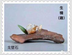 梅玺堂/全国奇石免费展示(第63期摘编)