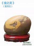 欣赏洛阳黄河石协会掌门雷洛育收藏的黄河石