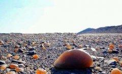 石头遇上对的人,才会赋有生命!