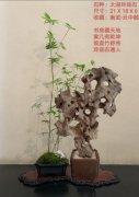 每日一石:雅赏青州太湖石《 玲 珑 》 图