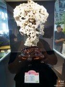 《昆石.雪玲珑》惊艳第十届中国花卉博览会 图